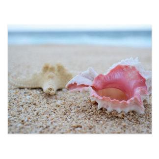 Seashells auf der Strand-Postkarte Postkarte