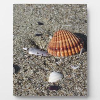 Seashells auf Sand Sommer setzen Draufsicht des Fotoplatte