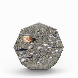 Seashells auf Sand. Sommerstrandhintergrund Acryl Auszeichnung