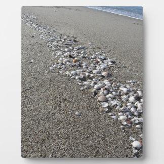 Seashells auf Sand. Sommerstrandhintergrund Fotoplatte