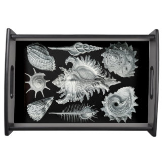 Seashells-Behälter 1 Tablett
