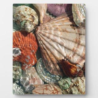 Seashells Fotoplatte