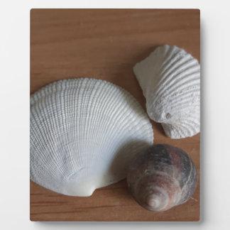 Seashells-hölzerner rustikaler Blick-Küstendekor Fotoplatte