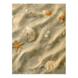 Seashells im Sand Postkarte