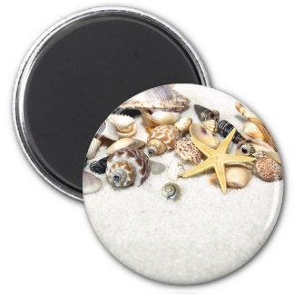 Seashells-Magnet Magnets