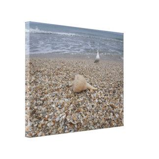 Seashells und Seemöven Leinwanddruck
