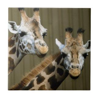 Seattle, Washington. Zwei Giraffen Fliese