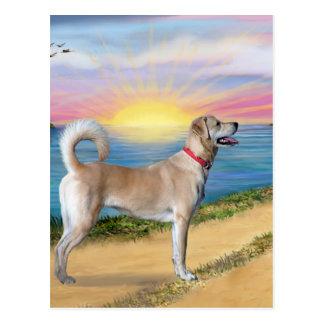See-Straße - gelbes Labrador retriever Postkarte