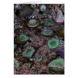 Seeanemonen und Starfish Karte