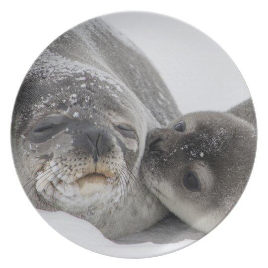 Seehundfamilie als Teller