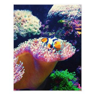 Seeleben-Clown-Fisch-Bild Fotodruck