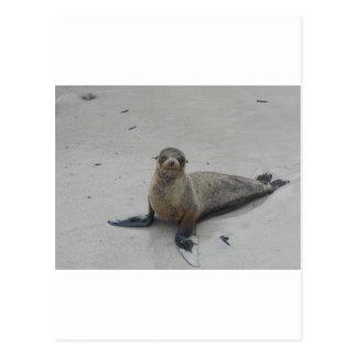 Seelöwe in den Galapagos-Inseln!! Postkarte