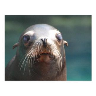 Seelöwe mit den Bärten Postkarte