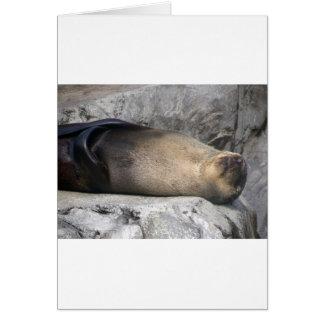 Seelöwe-Träumen Karte