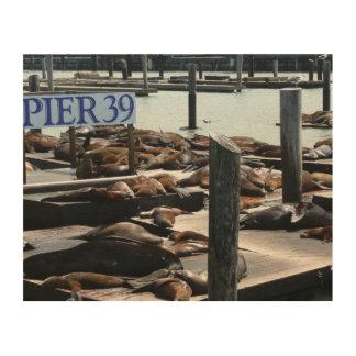 Seelöwen des Pier-39 in San Francisco Holzleinwand