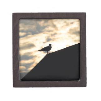 Seemöven-Sonnenuntergang Kiste