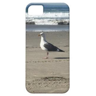 Seemöwe auf dem Strand iPhone 5 Schutzhülle