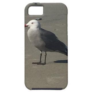 Seemöwe auf dem Strand iPhone 5 Schutzhüllen
