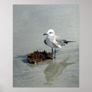 Seemöwe auf Strand mit Meerespflanze Poster