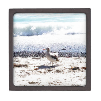 Seemöwe durch den Ozean auf dem Strandbild Kiste