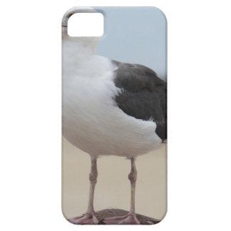 Seemöwe iPhone 5 Hülle