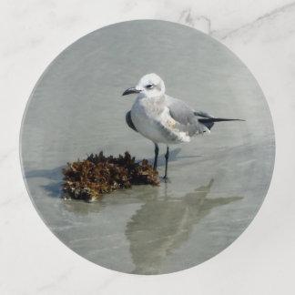 Seemöwe mit Meerespflanze auf Strand Dekoschale
