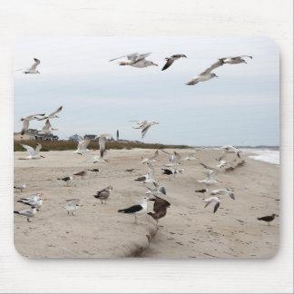 Seemöwen fliegend, stehend und essend auf dem mousepad