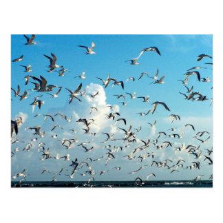 Seemöwen im Himmel über Einlassvögeln Postkarte