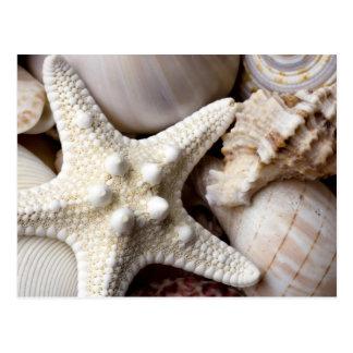 SeeMuschelstarfish-Hintergrund - Strand-Muscheln Postkarte
