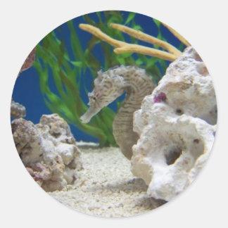 Seepferd Runder Aufkleber