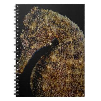Seepferd Spiral Notizblock