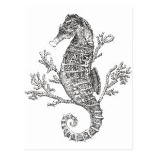 Seepferd und Koralle Postkarte