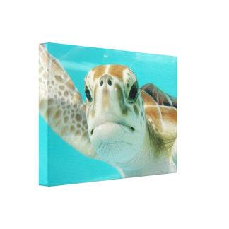 Seeschildkröte in Mexikaner-Wasser-Leinwand Leinwanddruck