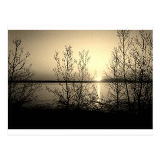 Seeseitebäume und -sonnenuntergang postkarte