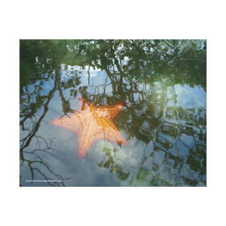 Seestern im Sumpf Leinwanddruck