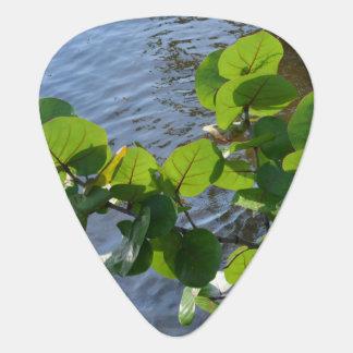 Seetrauben-Blätter über Plektrum