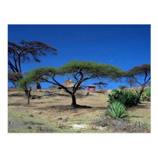 Seeuferszene in See Langano, Äthiopien Postkarte