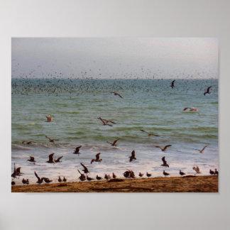 Seevogel-Schwarm an Kalifornien-Strand Poster