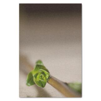 Seidenpapier mit Bild der grünen Blumenknospe