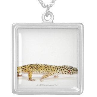 Seitenansicht der Leopard Geckoeidechse Versilberte Kette