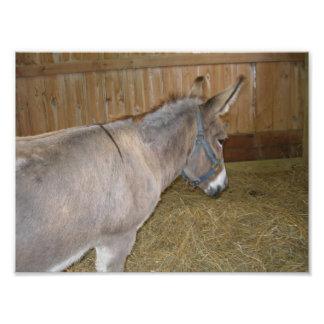 Seitenansicht eines Esels in einem Landkreis Fotodruck