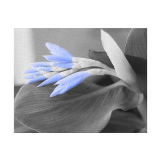 Selektive Farbe der hellblauen Knospen Leinwanddruck