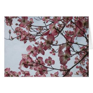Seltener rosa Hartriegel erhalten wohle Karte