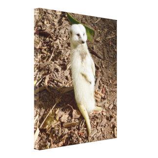 Seltener weißer Pelz stehendes Meerkat, Leinwanddruck