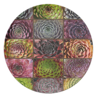 Sempervivum - Houseleek - Hauswurz - Collage Melaminteller