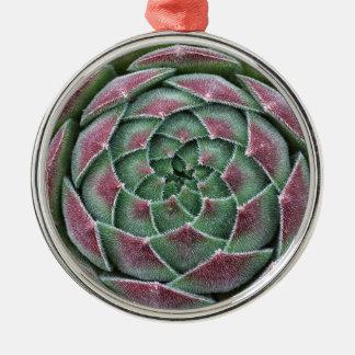 Sempervivum Ohio Burgundy Silbernes Ornament