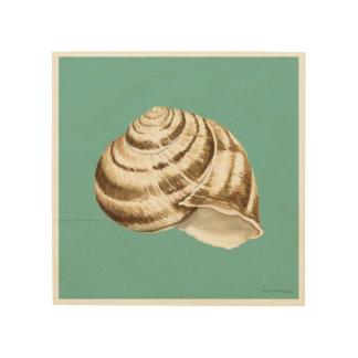 Sepia-gestreifte Muschel auf aquamarinem Holzdruck