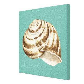 Sepia-gestreifte Muschel auf aquamarinem Leinwanddruck
