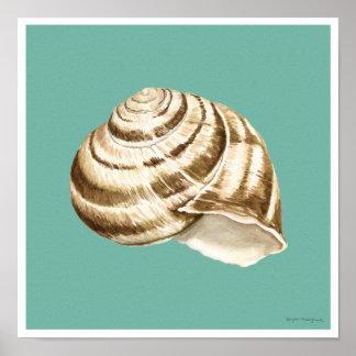 Sepia-gestreifte Muschel auf aquamarinem Poster