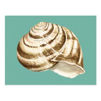 Sepia-gestreifte Muschel auf aquamarinem Postkarte